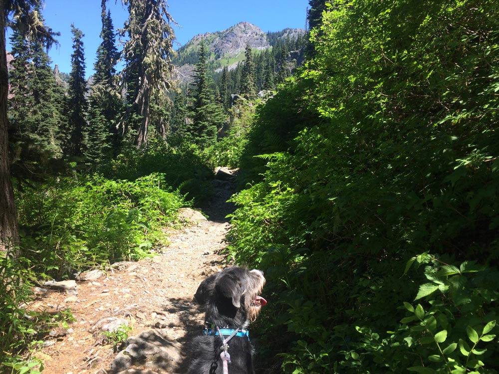 Wally on the Pacific Crest Trail